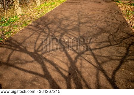 The Shadow Of A Large Tree Being Cast On Blacktop Pavement