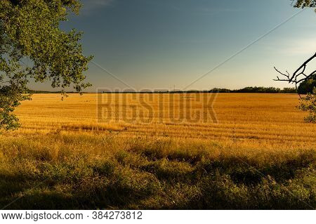 Evening On The Harvested Field. Field After Harvest. Evening On The Field.