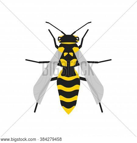 Vector Wasp Realistic Illustration In Flat. Bee Isolated Concept.