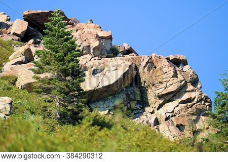 Alpine Meadow With Pine Trees Surrounding A Rocky Crag Of Boulders And Rocks Uplifted From The Earth