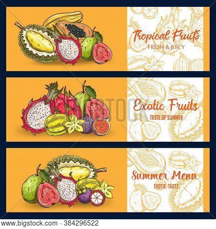 Tropical Fruits Vector Sketch Banners. Pitahaya, Mangosteen With Papaya, Figs, Durian And Carambola,