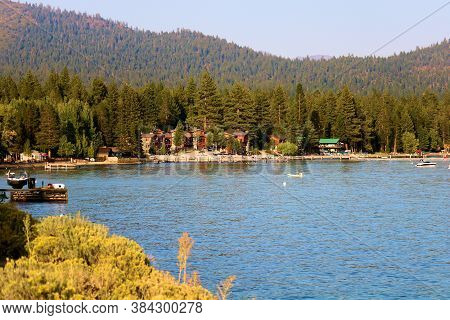 Sage Plant Flower Blossoms Besides Lake Tahoe, Ca With A Rustic Lodge And A Pine Forest Beyond