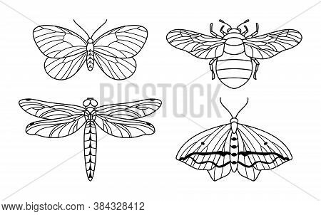 A Set Of Insect Icon Outlines In A Trendy Style. Vector Linear Illustrations Of Butterflies, Bumbleb