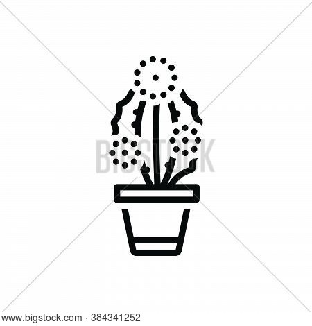 Black Line Icon For Prickly-pearprickly Pearcactus Desert Cacti Green Mediterranean Mexican Natura