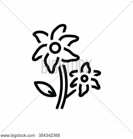 Black Line Icon For Lily-flowers Lily Florist Natural Flower Blossom Botanical