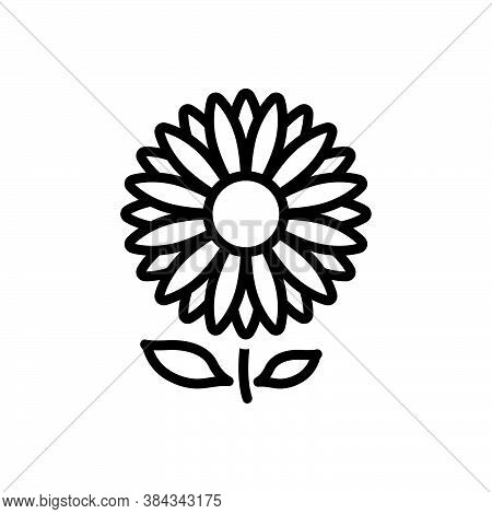 Black Line Icon For Daisy Bellis-perennis Marguerite Camomile Horticulture Blooming Natural Flower B