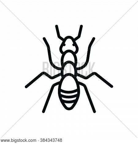 Black Line Icon For Ant Leg Fauna Critter Small Pest Nature Animal Insect