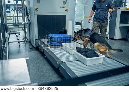 Officer And Detection Dog Inspecting Luggage In Airport