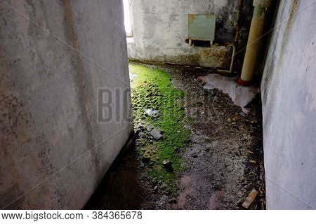 Moss On The Concrete Floor Near The Garbage Chute In An Old Abandoned House.