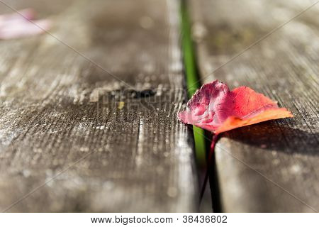 Red Fall Leaf on a Picnic Table