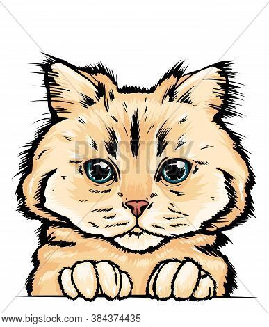 Hand-drawn Vector Portrait Of A Cat. Colorful Portrait Of A Cat Muzzle. Cat Portrait Beautiful Eyes