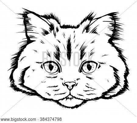 Vector Drawing Portrait Cat Hand Drawn. Black And White Muzzle Of A Siberian Cat. Portrait Of A Cat