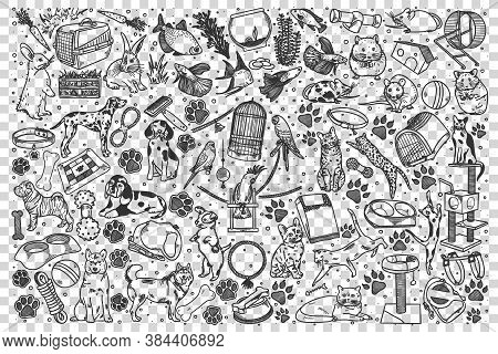 Pets Doodle Set. Collection Of Hand Drawn Sketches Templates Pattern Of Birds Parrots Cats Dogs Pupi