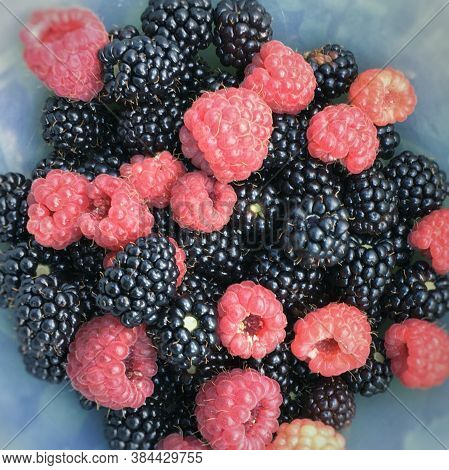 Ripe Fruits Of Raspberries And Blackberries Close Up. Natural Background From Fresh Berries. High Qu