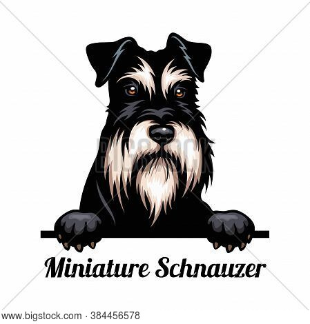 Head Miniature Schnauzer - Dog Breed. Color Image Of A Dogs Head Isolated On A White Background