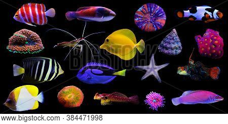 Colorful Saltwater Creature Group In Black Isolated Background