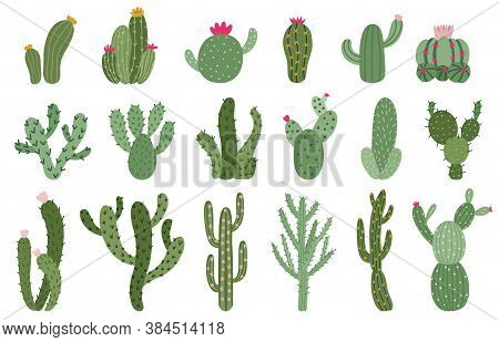 Cute Cactus. Succulents And Cacti Flower, Green Prickly Desert House Plants, Tropical Home Plants Is