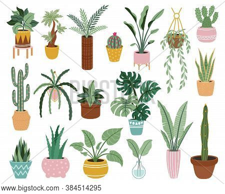 Home Potted Plants. Houseplants In Plant Pots, Flower Potted Plant, Green Leaves Interior Decoration