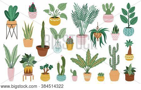 Plant In Pots. Home Potted Plants, Flower House Plants, Ficus, Cacti And Succulents, Indoor Decorati