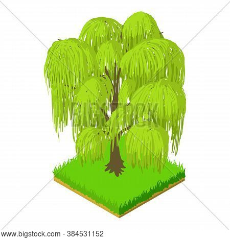 Weeping Willow Icon. Isometric Illustration Of Weeping Willow Vector Icon For Web