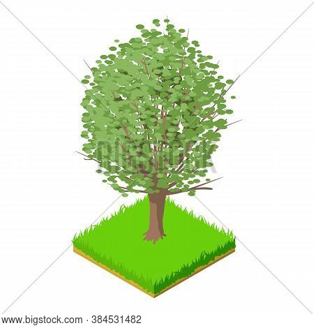 American Elm Icon. Isometric Illustration Of American Elm Vector Icon For Web