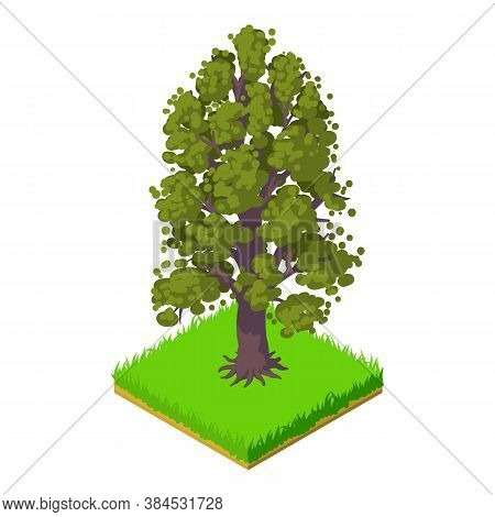 American Chestnut Icon. Isometric Illustration Of American Chestnut Vector Icon For Web