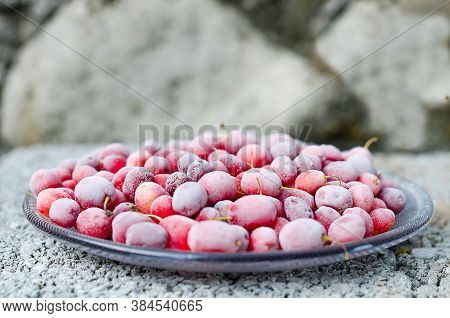 Frozen Berries, Covered With Frost - Dogwood On A Gray Concrete Background. Space For Text, Copy Spa