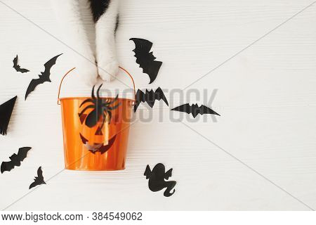 Happy Halloween! Cat Paws Holding Jack O Lantern Candy Bucket On White Background With Bats, Celebra