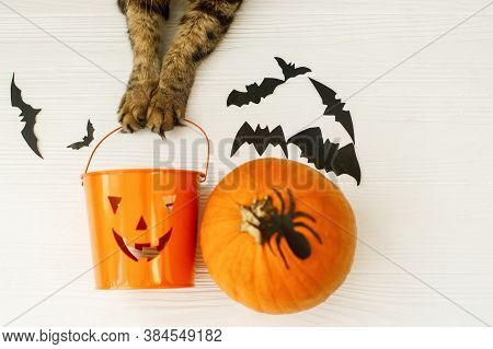 Happy Halloween! Cat Paws Holding Jack O Lantern Candy Bucket On White Background With Pumpkin, Bats
