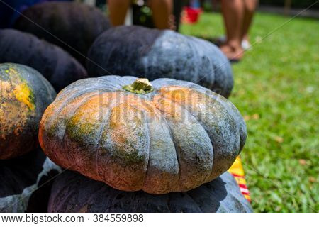 Black And Orange Pumpkin Bunch. Ripe Vegetable On Market. Ripe Squash Closeup Photo. Autumn Season B