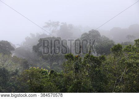 Brazil - Misty Jungle In Mata Atlantica (atlantic Rainforest Biome) In Serra Dos Orgaos National Par