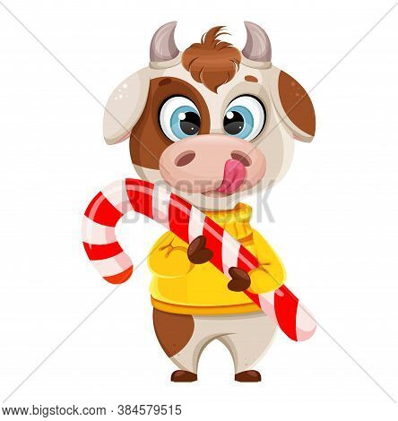 Funny Bull Holding Big Candy Cane. Cute Bull Cartoon Character In Sweater, The Symbol Of Chinese New