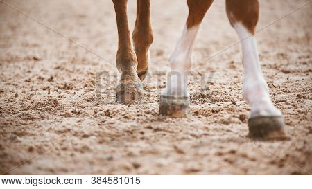 A Sorrel Horse With Elegant Legs Walks Slowly With Its Hooves On The Sand, Illuminated By The Light.