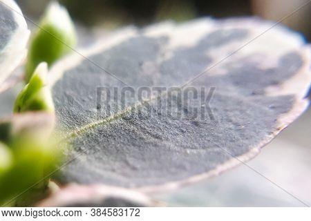 Closeup View Of Macro Leaf Background. Natural Super Macro.