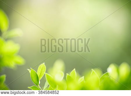 Closeup Beautiful Attractive Nature View Of Green Leaf On Blurred Greenery Background In Garden With