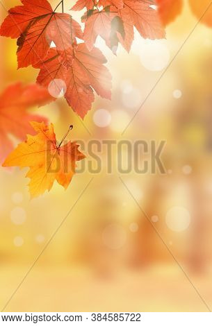 Background Of Brown Leaves In The Park, Autumn Season. Background Natural Plants Landscape, Ecology.