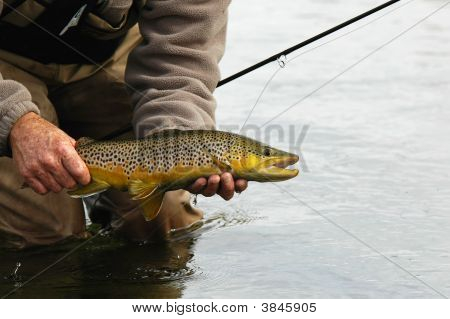 Fall Silver Creek Brown Trout