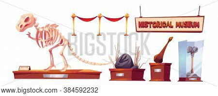 Historical Museum With Dinosaur Skeleton And Archeological Exhibits. Vector Cartoon Set Of Finds Of