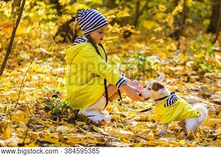 Child Plays With Jack Russell Terrier In Autumn Forest. Autumn Walk With A Dog, Children And Pet Con
