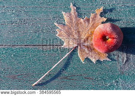 The First Frosts In Late Autumn. The Apple Were Covered With Frost.