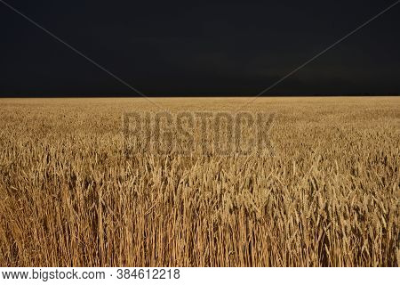 Wheat Field Before The Storm, Before The Storm