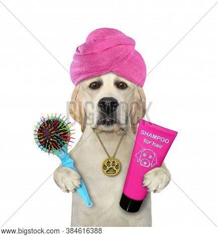 A Dog With A Pink Towel Around His Head Holds A Hairbrush And Shampoo After Shower. White Background