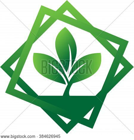 Logo Vector With Three Leaves Surrounded By Two Squares. Leaves Logo. Nature Leaf Logo. Eco Leaf Log
