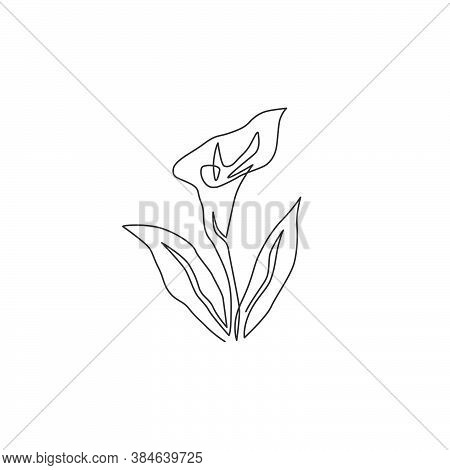 One Continuous Line Drawing Of Beauty Fresh Arum Lily For Garden Logo. Printable Decorative Zantedes