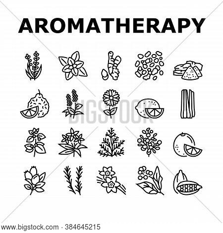 Aromatherapy Herbs Collection Icons Set Vector. Lavender And Peppermint, Ginger And Frankincense, Pa