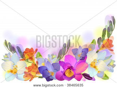 Vector Horizontal Background With Gentle Freesia Flowers