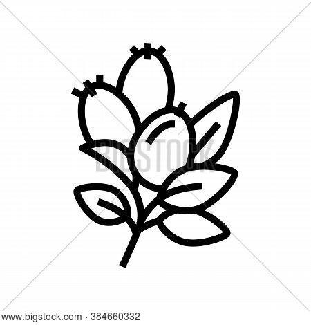 Rosehip Aromatherapy Line Icon Vector. Rosehip Aromatherapy Sign. Isolated Contour Symbol Black Illu