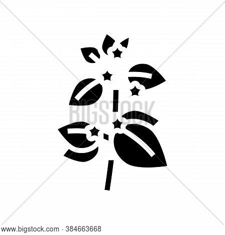 Melissa Herbal Aromatherapy Glyph Icon Vector. Melissa Herbal Aromatherapy Sign. Isolated Contour Sy