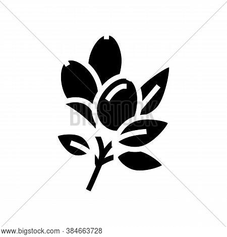 Rosehip Aromatherapy Glyph Icon Vector. Rosehip Aromatherapy Sign. Isolated Contour Symbol Black Ill