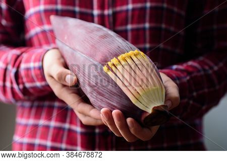 Banana Flowers Holding By Hand, Edible Plant In Southeast Asian Cuisine, Food Ingredients In Salad,